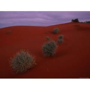 Sagebrush Grows on a Red Sand Dune National Geographic