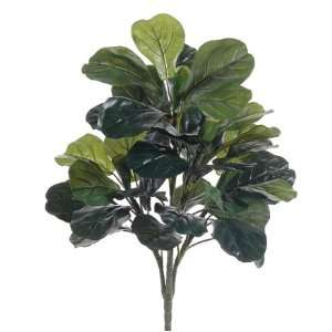2 Fiddle Leaf Fig Silk Tree (case of 6): Home & Kitchen