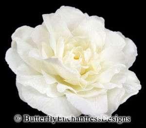 Ivory Peony Rose Flower Bridal Hair Clip Wedding