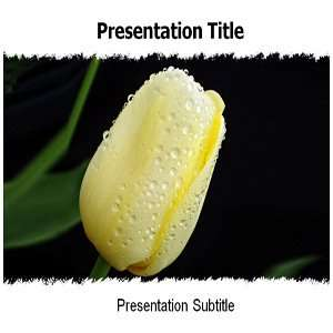 Powerpoint Templates   Yellow Tulip Powerpoint Templates Background
